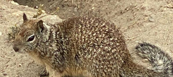 Ground Squirrel or Tree Squirrel? What's the difference?